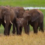 Elephants, Tarangire National Park, Tanzania