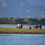 Expeditions Safari - Zambezi River