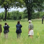 Nehimba walking safari