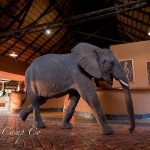 Elephant in Mfuwe reception area